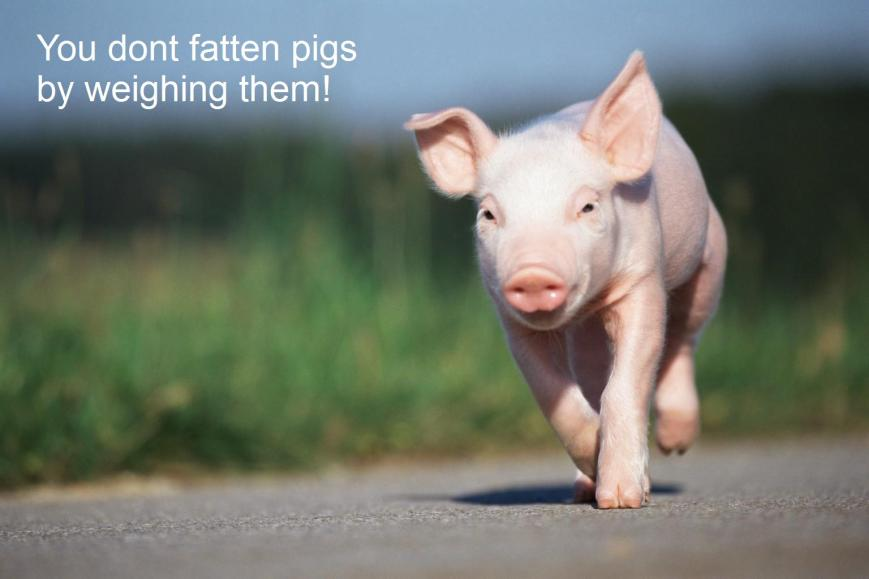 You dont fatten pigs 2